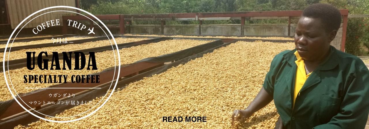タンザニアスペシャルティコーヒー  ンゴロンゴロ